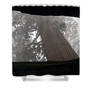 Foggy Morning Sequoias Shower Curtain