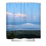 Foggy Porcupines Color Shower Curtain