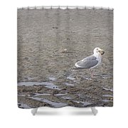 Foggy Seabird Seagulls Brunch Shower Curtain