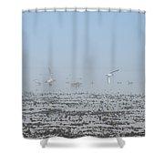Foggy Seabirds Parksville Beach Shower Curtain