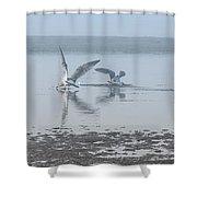 Foggy Seabirds Low Tide Buffet Shower Curtain