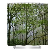 Foggy Woods Shower Curtain