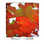 Foglie Di Rosse Shower Curtain