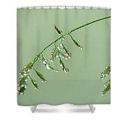 Foliage On Mount Pilatus Shower Curtain