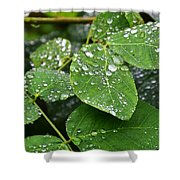 Foliageworks 2 Shower Curtain