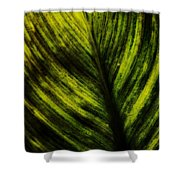 Foliole Shower Curtain