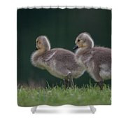 Follow Daddy Shower Curtain