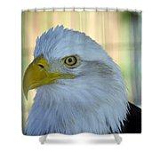 Fontana Eagle Portrait 4 Shower Curtain