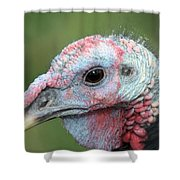 Fontana Turkey Portrait Shower Curtain