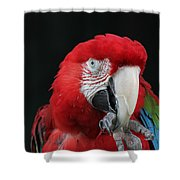 Foot Hold Shower Curtain