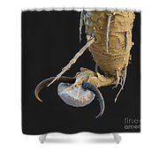 Foot Of A Bat Tick Sem Shower Curtain