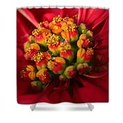 For Christmas Shower Curtain