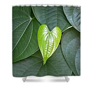 Everything Grows With Love Shower Curtain