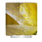 For The Love Of Lilies 4 Shower Curtain