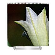 For The Love Of Lilies 9 Shower Curtain