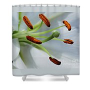 For The Love Of Lilies 8 Shower Curtain