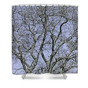 For The Love Of Trees - 2  Shower Curtain