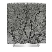 For The Love Of Trees - 2 - Monochrome  Shower Curtain