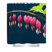 Bleeding Hearts For Your Love Shower Curtain
