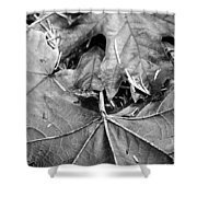 Foraged Insights Shower Curtain
