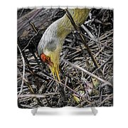 foraging for wild edibles Sandhill Crane Shower Curtain