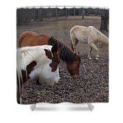 Foraging Horses Shower Curtain