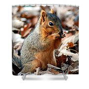 Foraging Through The Autumn Leaves Shower Curtain
