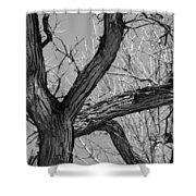 Forest #2 Shower Curtain