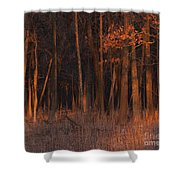 Forest At Sunset Shower Curtain
