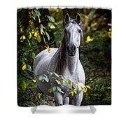 Forest Beauty Shower Curtain