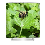Forest Bee 7260 Shower Curtain