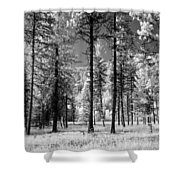 Forest Black And White Shower Curtain