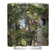 Forest Black Bear Cub Shower Curtain