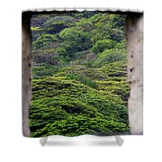 Forest Canopy Through The Window Of The Ruins Shower Curtain