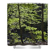 Forest Cathedral Shower Curtain