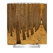 Forest Cathedral - One Shower Curtain