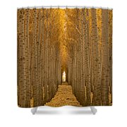 Forest Cathedral - Two Shower Curtain