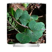Forest Clover Shower Curtain