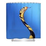 Forest Cobra Naja Melanoleuca Shower Curtain