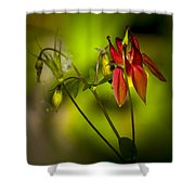 Forest Columbine  Shower Curtain