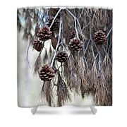 forest decoration - A pine tree give us a natural autumn decoration  Shower Curtain