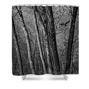 Forest Flight Shower Curtain
