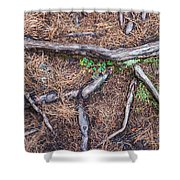 Forest Floor With Tree Roots Shower Curtain