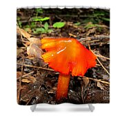 Forest Fungi Flare Shower Curtain