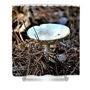 Forest Fungus Shower Curtain
