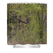 Forest Glimpse Shower Curtain