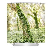 Forest Glow - The Magical Trees Of The Los Osos Oak Reserve Shower Curtain