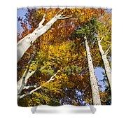 Forest In Autumn Bavaria Shower Curtain