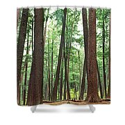Forest In Early Morning, Wetlands Shower Curtain