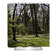 Forest In Spring Shower Curtain